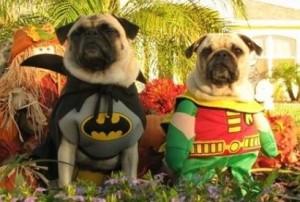 Disfraces divertidos para perros
