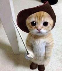 disfraces-geniales-y-gatos